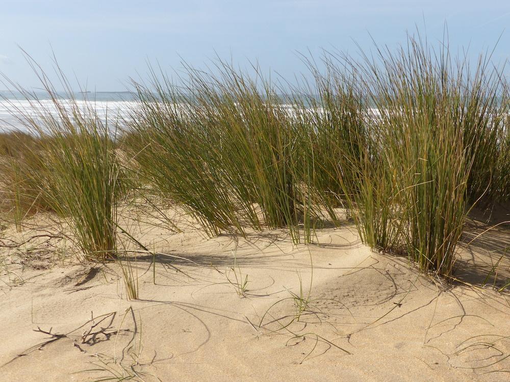 dunes sauvages gavres quiberon